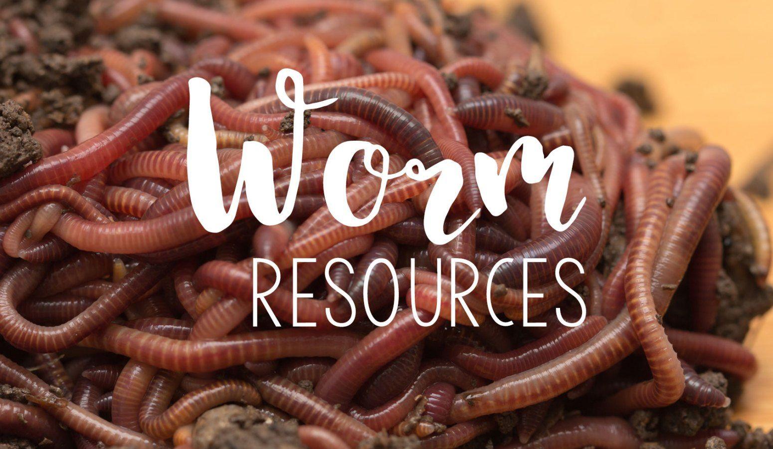 Fun With Worms S I Said Fun