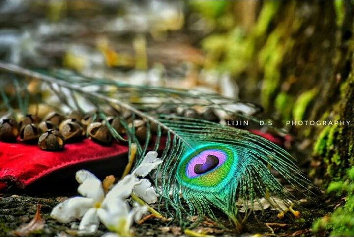 Pin By Lakshmi Vishnu On ച ലങ ക Indian Classical Dance Photoshop Backgrounds Indian Dance