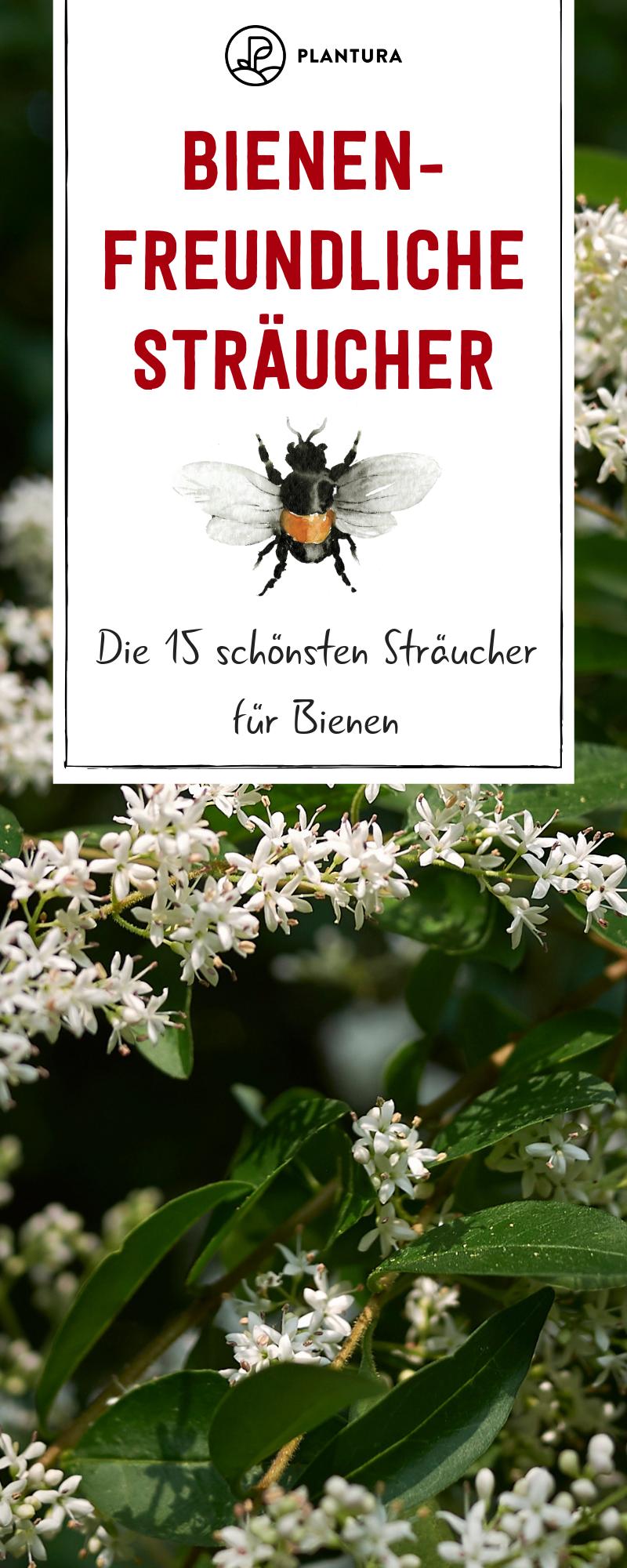 Bienenfreundliche Straucher Top 15 Bienenstraucher In 2020 Greenhouse Gardening Hydroponic Gardening Diy Hydroponic Gardening