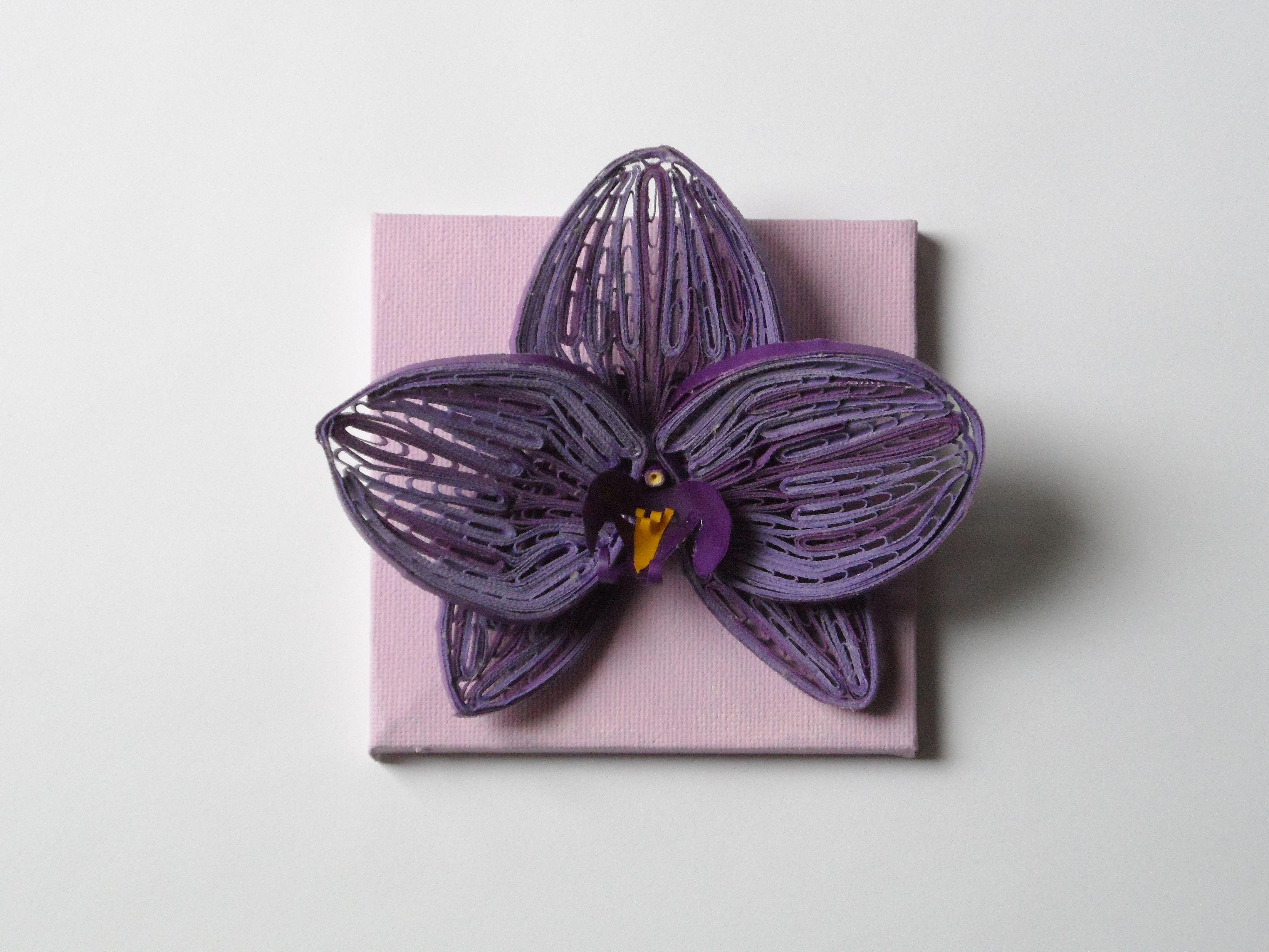 Самая редкая орхидея в мире фото этом тайгане