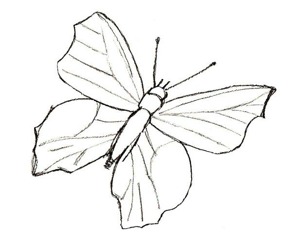 How to draw a Butterfly, step 3   Doodles in 2019   Easy ...