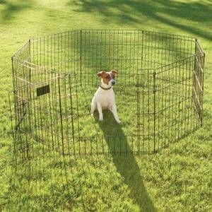 Dallas For Sale Puppies Craigslist Puppies Animals Sale