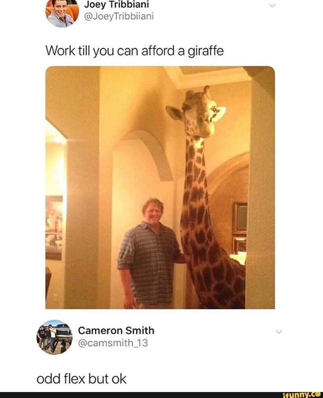 Work Till You Can Afford A Giraffe Odd Flex But Ok Ifunny In 2020 With Images Funny Tumblr Comments Funny Relatable Memes Tumblr Funny
