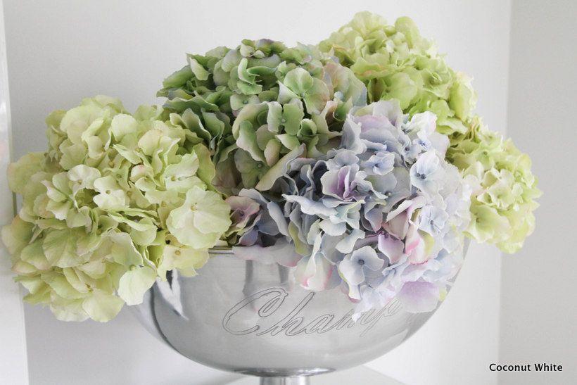 Coconut White: Kauniit Sia:n hortensiat olohuoneessa