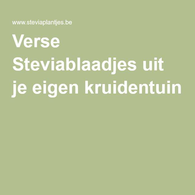Verse Steviablaadjes uit je eigen kruidentuin