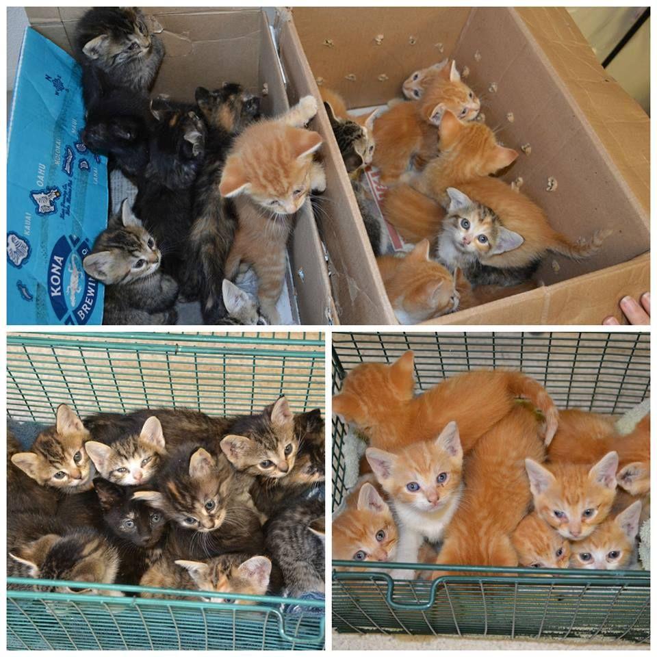 Sacramento Spca Is In Desperate Need Of Wet Kitten Food Please