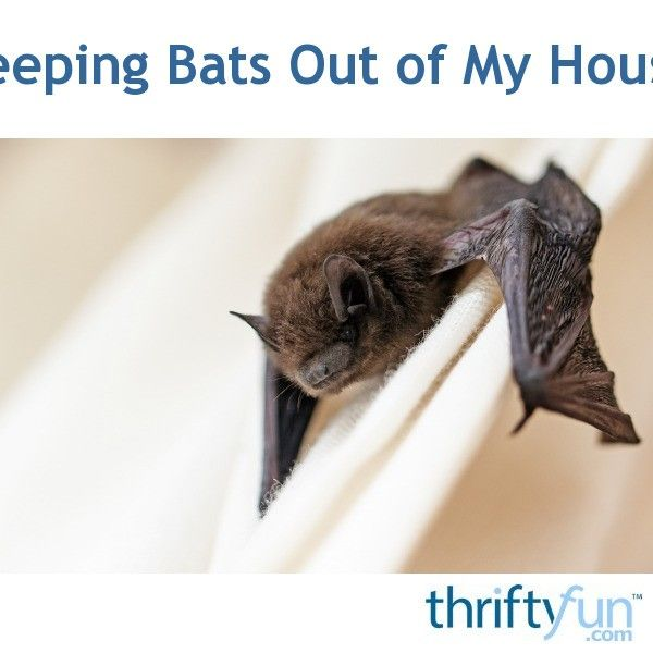 Keeping Bats Out Of My House Bat Houses Bat Repellent House