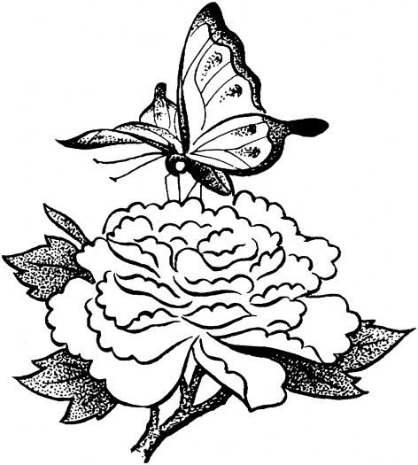 Butterfly On A Flower Butterfly Coloring Page Flower Coloring Pages Butterfly Art Painting