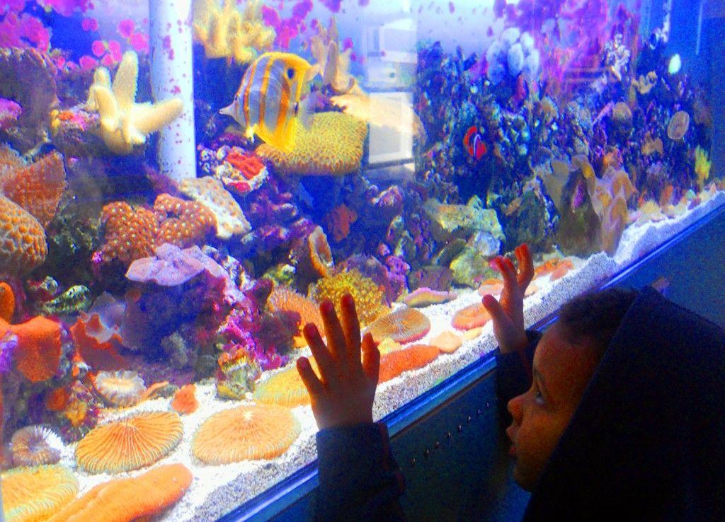 Sea Lab Aquarium In Redondo Beach