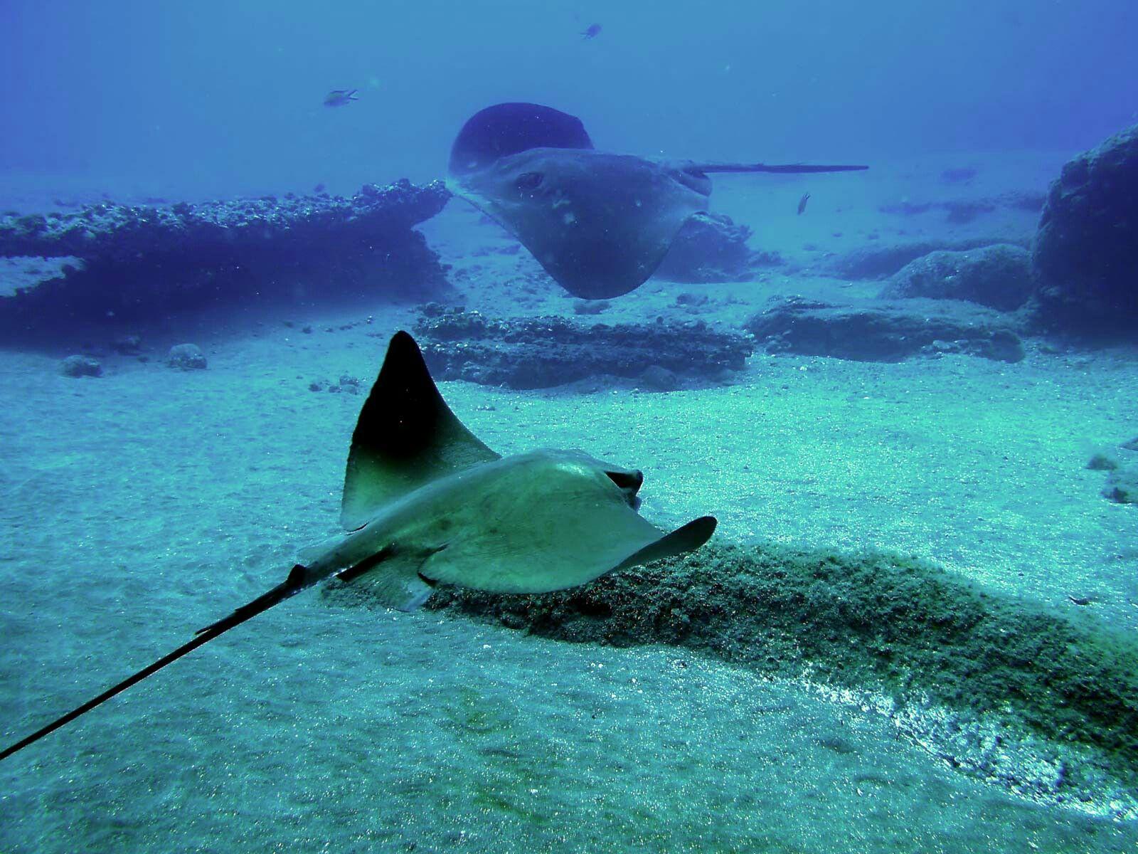 Картинки про подводных животных