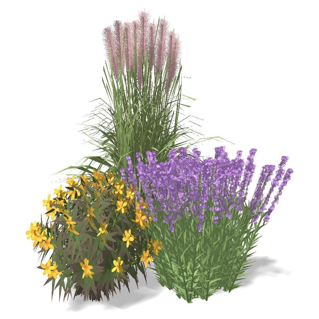 Hypericum 'Albury Purple', Miscanthus 'Huron Sunrise' and ...