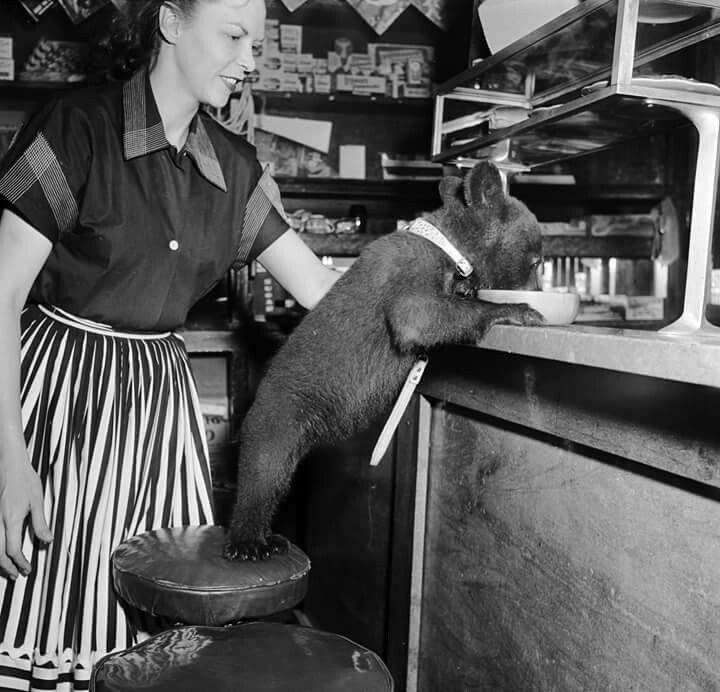foto che hanno segnato unu0027epoca Una cameriera guarda un cucciolo - steckdosenleiste für küche