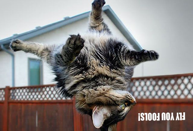 Dump A Day Fly You Fools - Cat Edition (20 Pics)