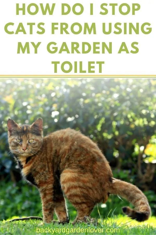 How To Stop Cats From Using My Garden As Toilet Keep