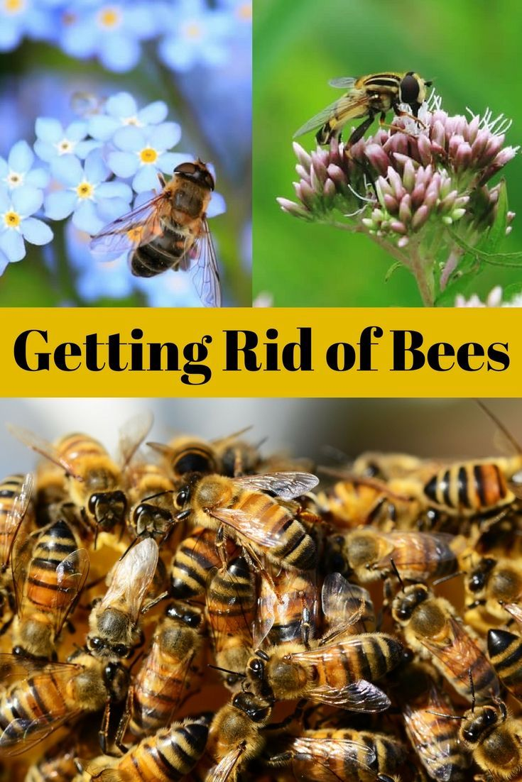 Bees are an essential part of the ecosystem and when they