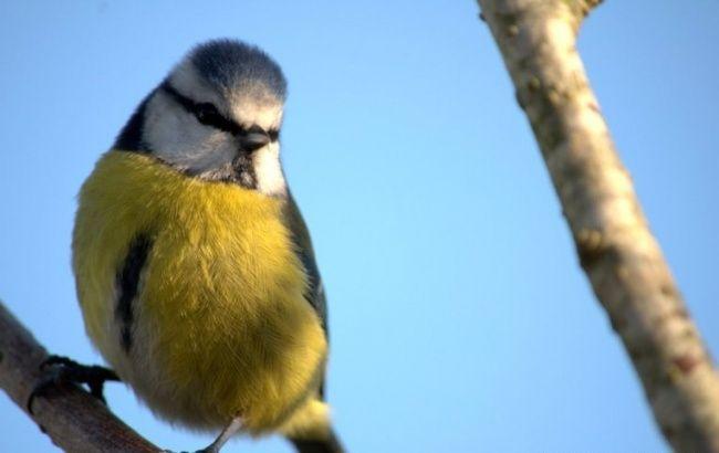 Doprajte Vianoce aj vtáčikom: Urobte im jedlú výzdobu | LepšieBývanie.sk