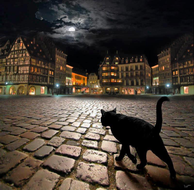 Gelukkig... ik ben de zwarte kat gisteren niet tegengekomen!