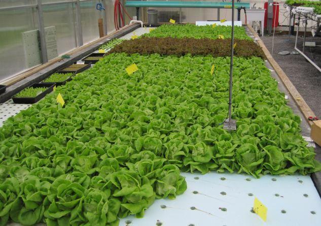 Cea greenhouse raft hydroponics raft hydroponics for Hydroponic raft system design