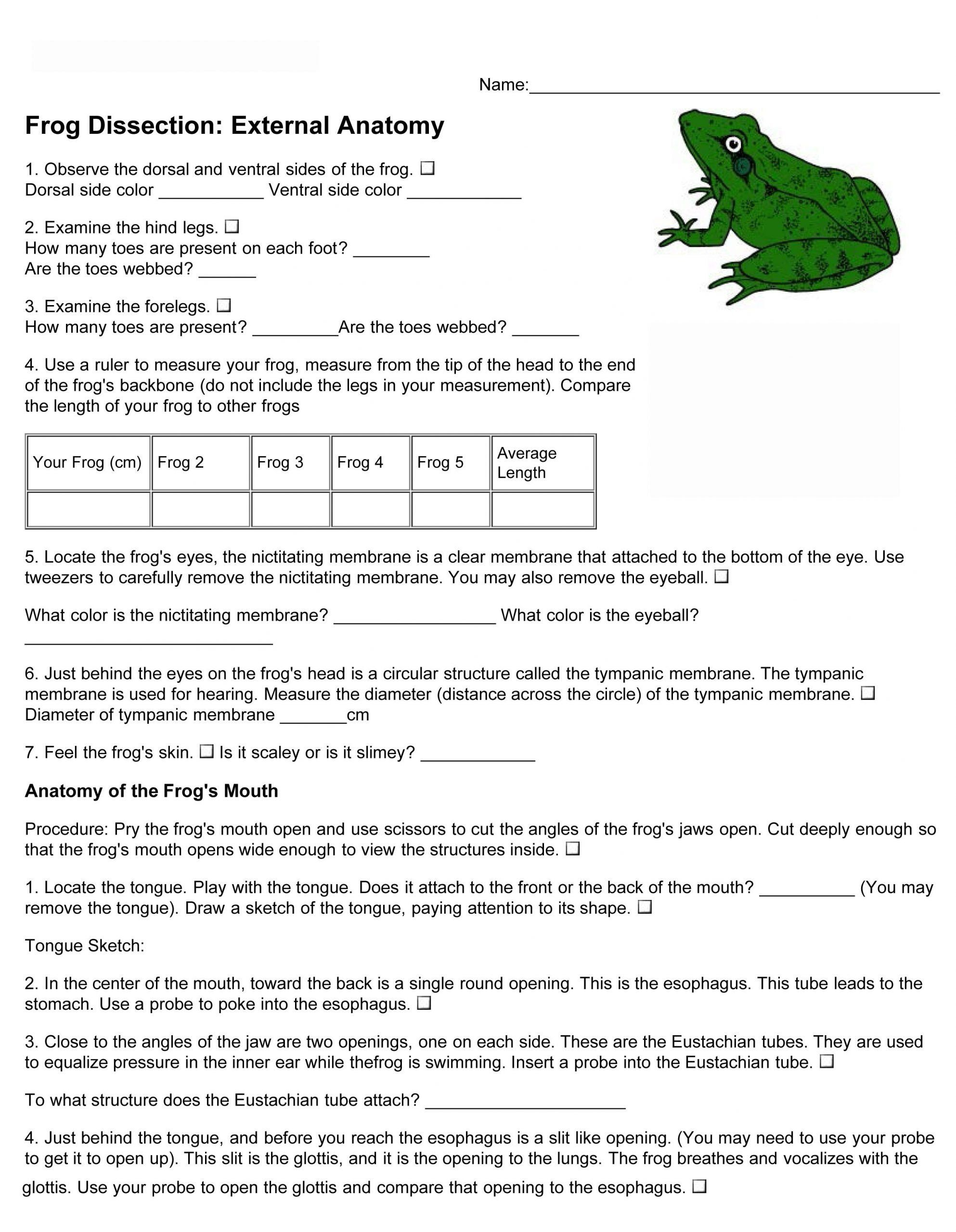 Frog Dissection Worksheet Answers Frog Dissection Lab Worksheet Answers Frog Dissection Frog Dissection Worksheet Frog Dissection Lab