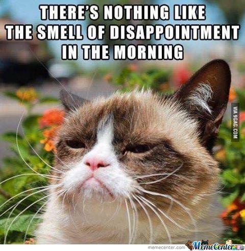 Good Morning Grumpy Cat Grumpy Cat Meme Grumpy Cat Grumpy Cat Humor