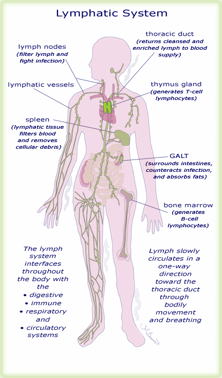 How Can Exercising Improve Your Lymphatic System Pinterest