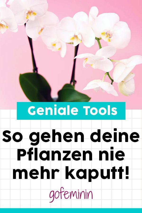 Keinen grünen Daumen? Diese Tools machen deine Pflanzen glücklich! #pflegeleichtepflanzen