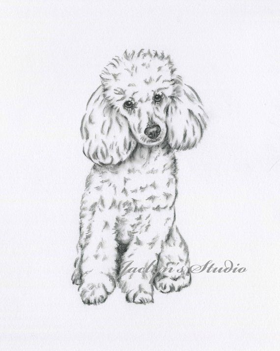 Poodle Art Poodle Drawing Giclee Print 8x10 Poodle Drawing Dog