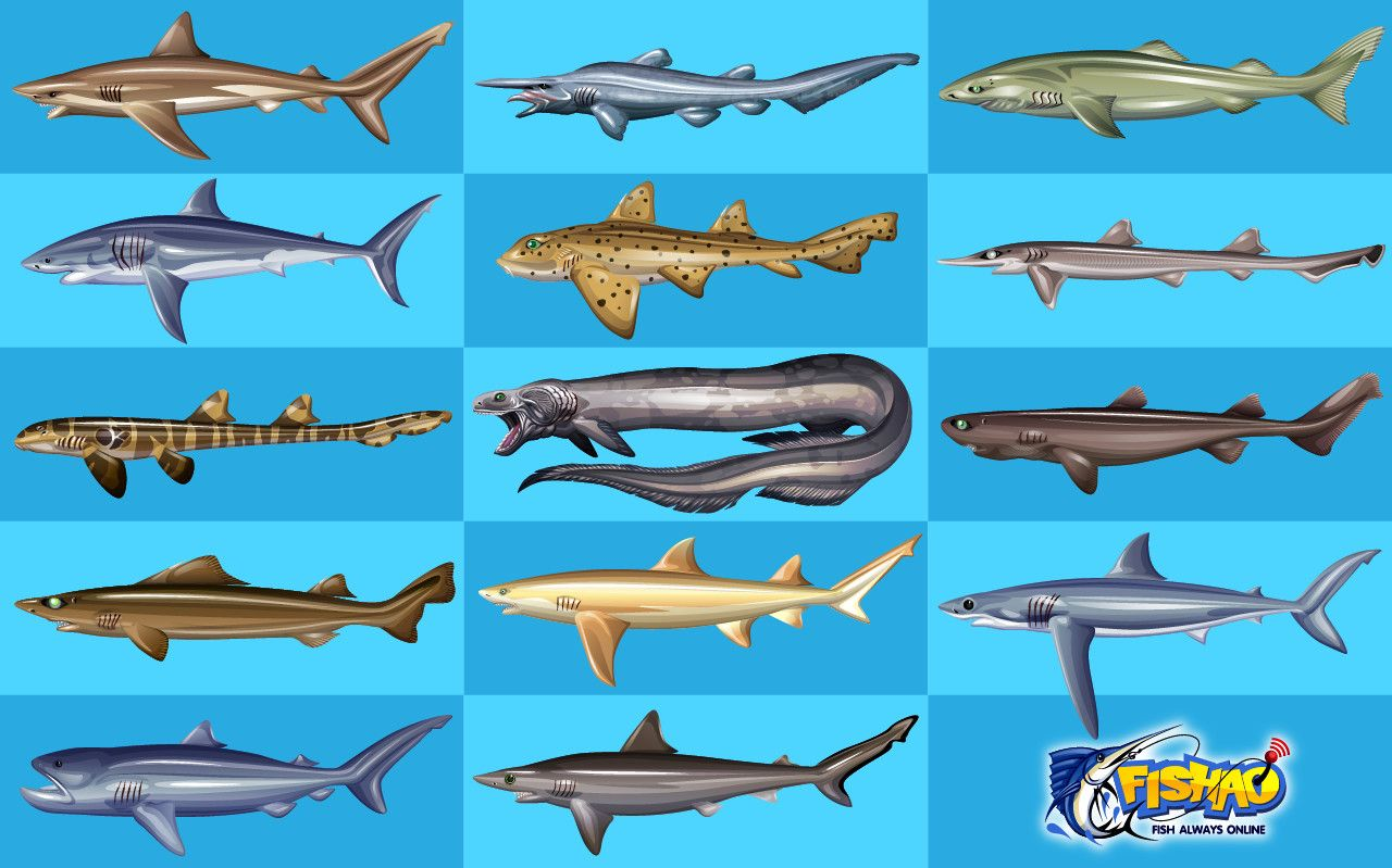 Shark Fish Images