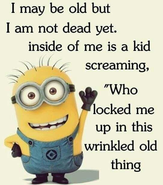 Minion Funny Minion Memes Minions Funny Funny Minion Pictures
