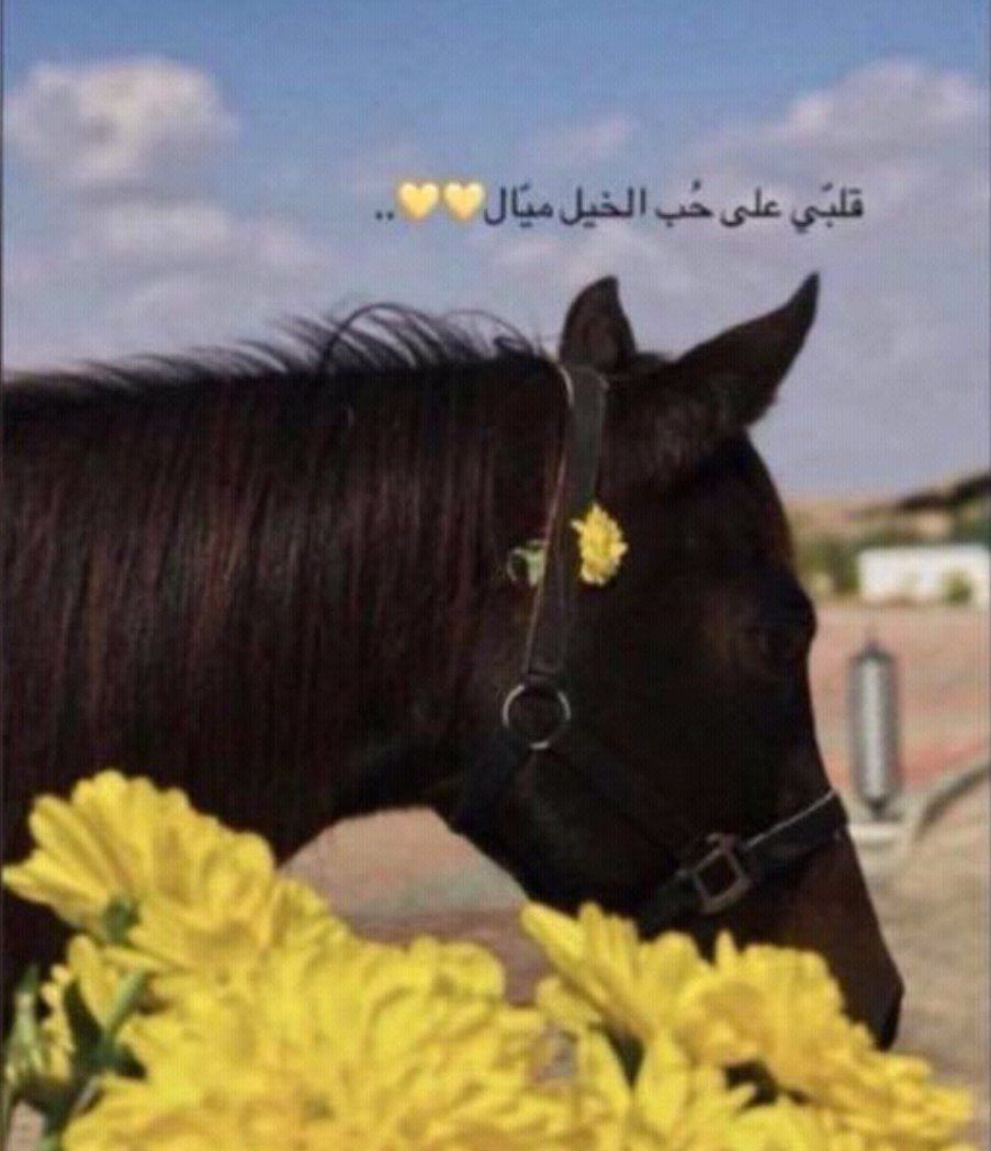أيـلام المرء ف ي ح ب الخيـل Arab Men Animals Horses