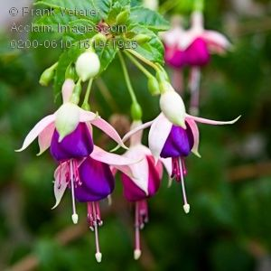 Pin By Tia Virlana On Ruby Throated Hummimgbird Flowers Beautiful Flowers Plants