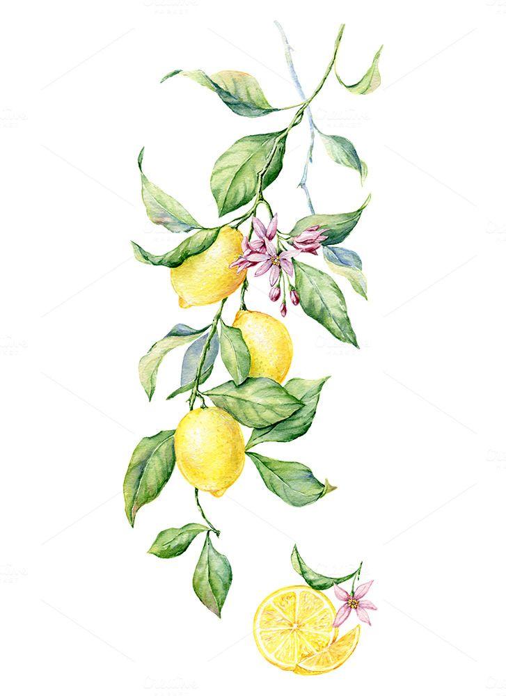 Watercolor Lemon By Annasuprunenko On Creativemarket Lemon Watercolor Lemon Art Lemon Painting