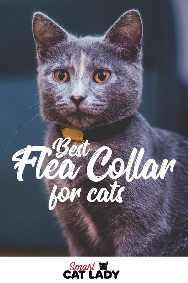 Best Flea Collar For Cats To Keep The Pests Away Cat Care Cat Fleas Dog Flea Treatment
