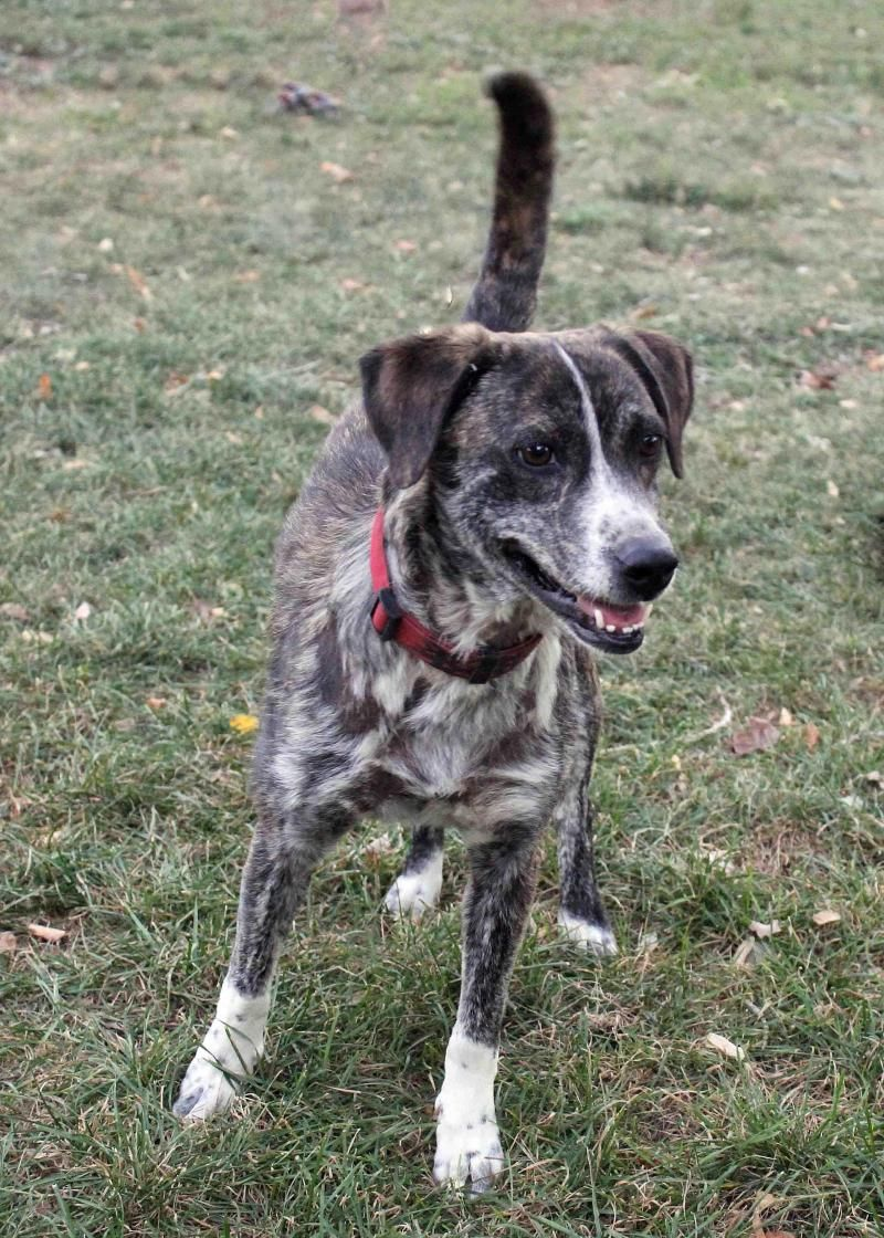 Adopt Squirrel on (With images) Catahoula leopard dog