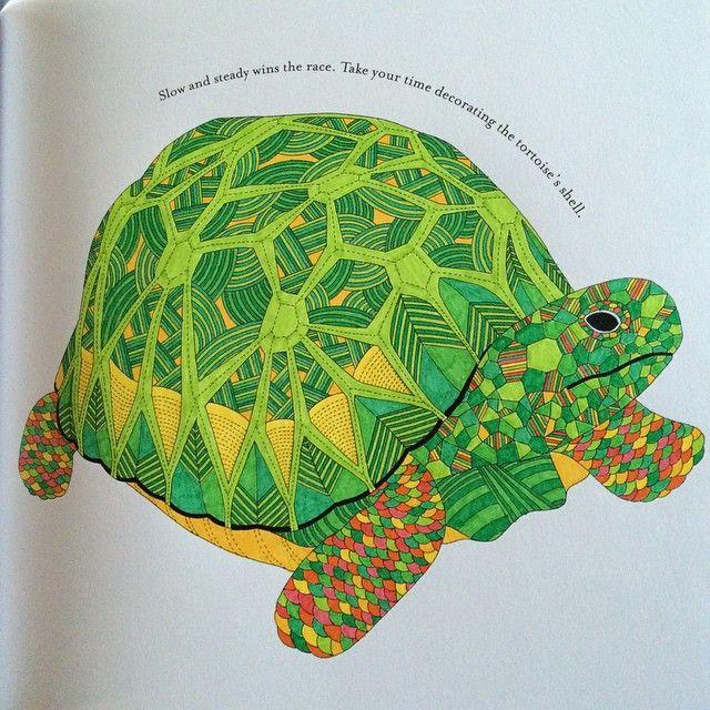 My Tortoise MillieMarotta AnimalKingdom Colouring