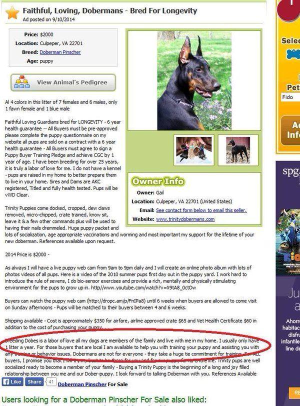 Breeder Review Breederreview Twitter Doberman Breed