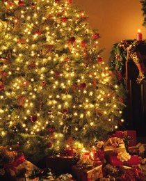 Christmas Background Images Portrait.We Used This Background For Josiah S 1st Christmas Photos