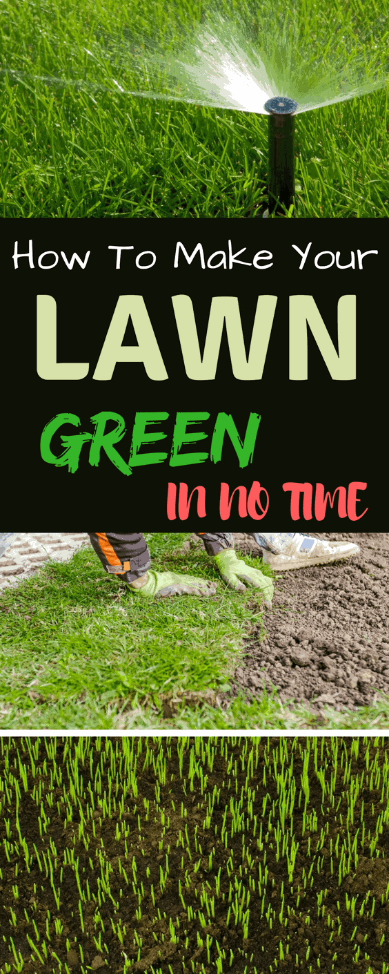 How To Grow Grass Fast A Green Hand Grow Grass Fast Growing Grass Lawn Care