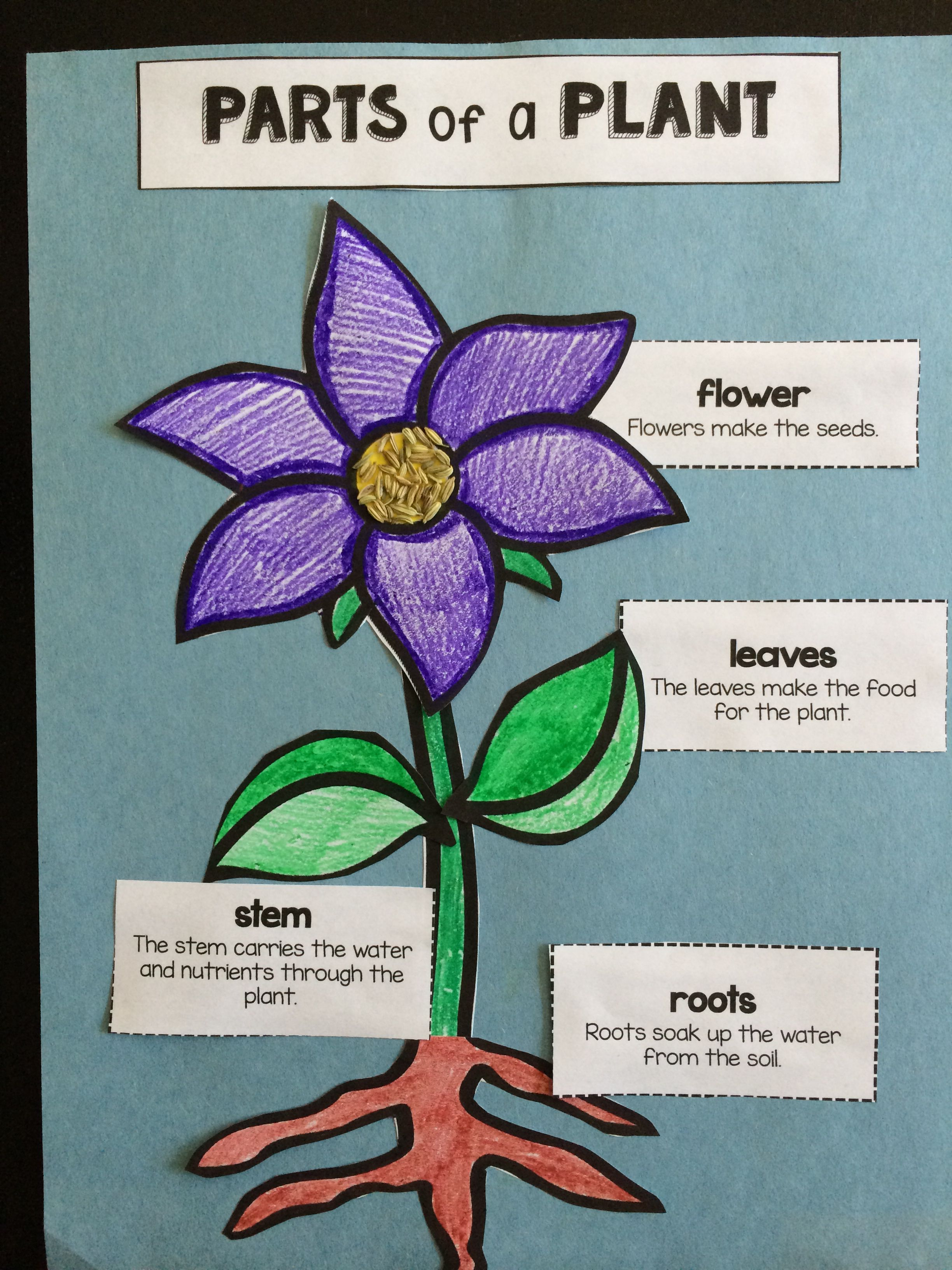 Plants arts and crafts - Parts Of A Plant Labeling Activity And Craft