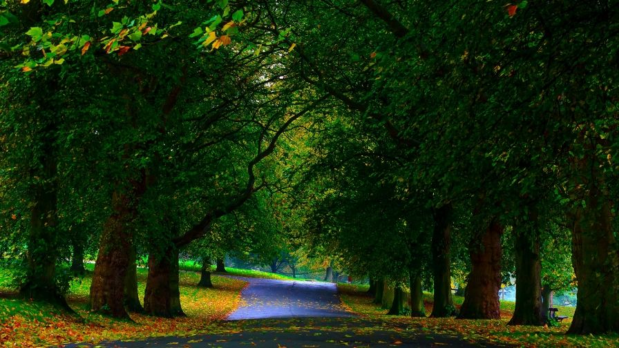 Park Trees Greenery Hd Wallpapers Download Wallpaper