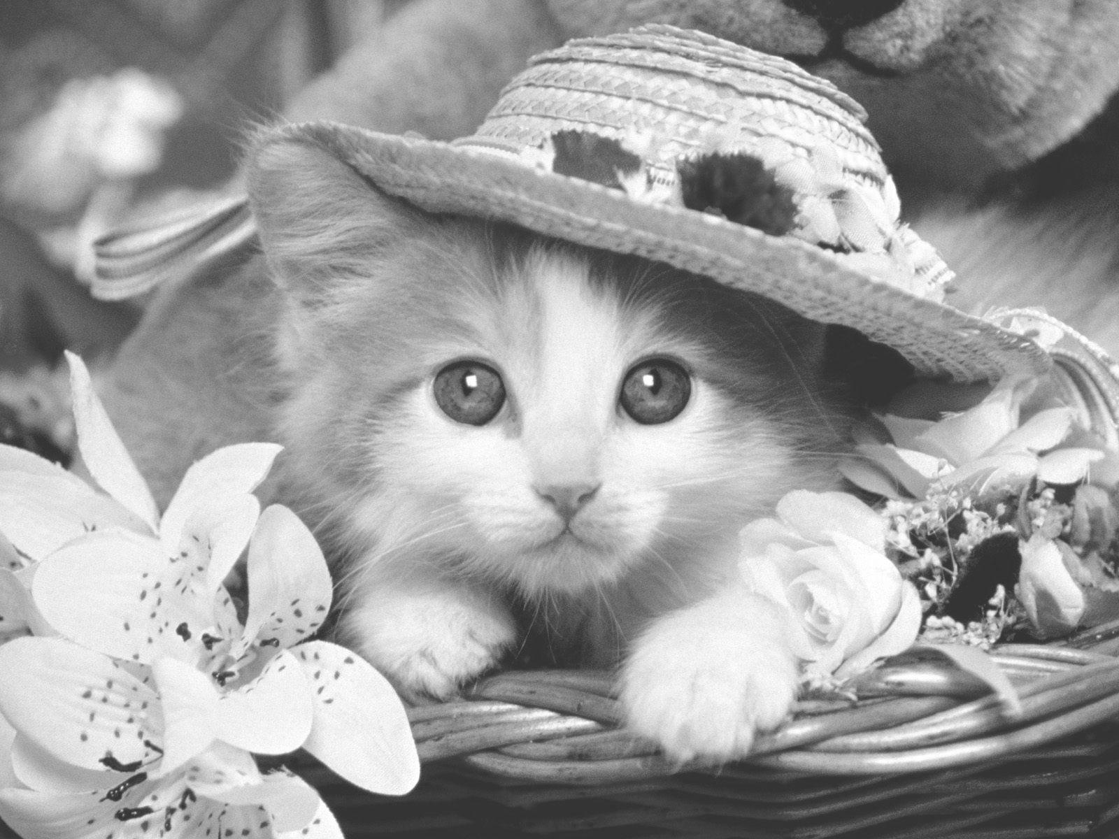 Kleurplaten Baby Katjes.Kleurplaat Animals Katten Katzen Katzen Bilder En Schone