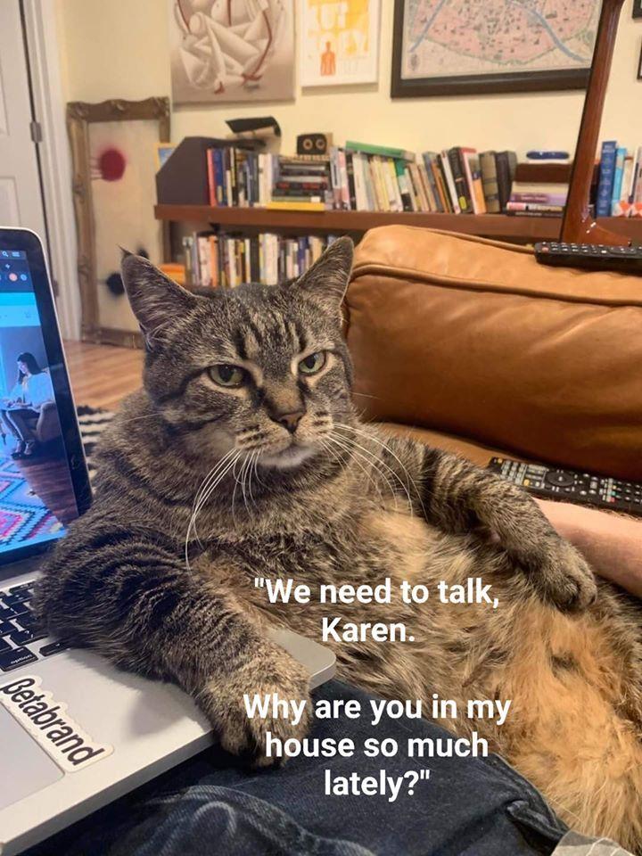 Pin by Dosao da vidi neke slike on ha in 2020 Funny cats