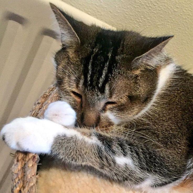 My Four Cats Design beautiful cat bed cat house cat