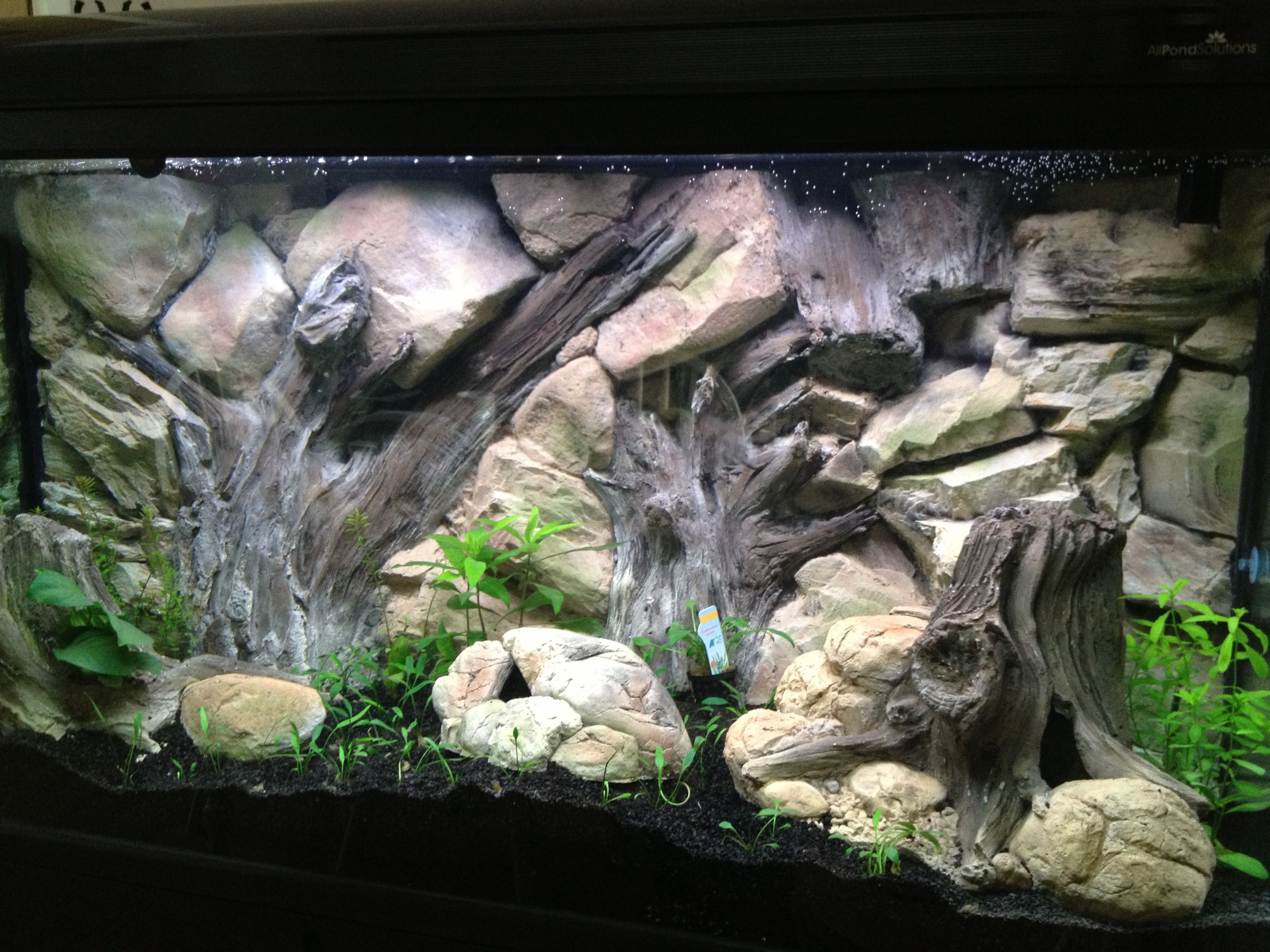 Cool aquarium ornaments - Cool Example Of Aquarium Decoration With Our 3d Root Background And Tree Trunks The Background