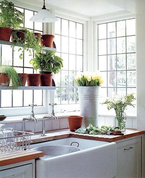 Azulejos blancos alrededor de la tarja, plantas en repisas, ventana