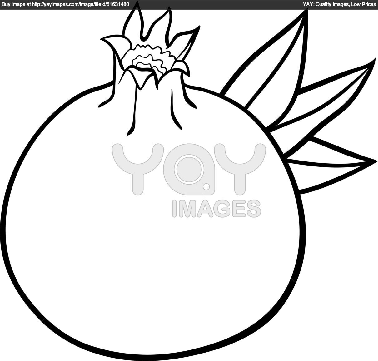 Royalty Free Vector Of Pomegranate Fruit For Coloring Book Granat