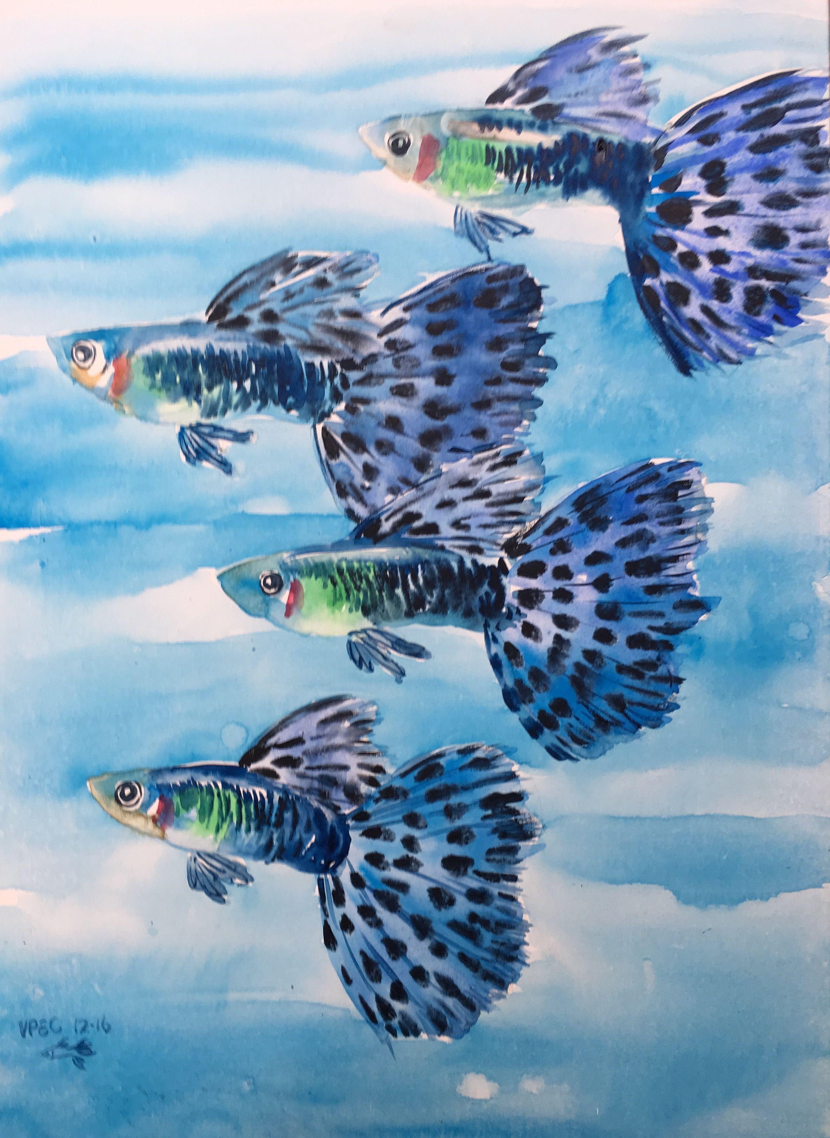 Ghim của Violet Chia trên guppy paintings