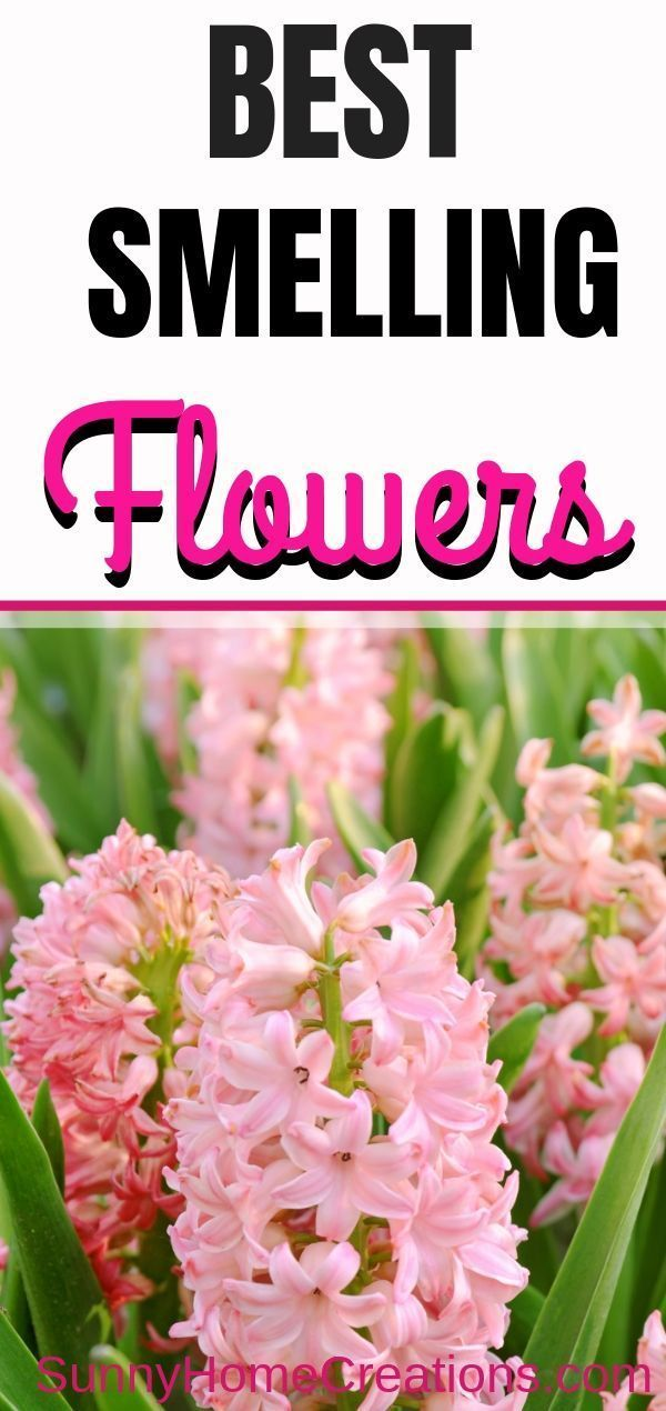 10 Best Smelling Flowers for Your Yard is part of Best smelling flowers, Smelling flowers, Backyard flowers, Backyard flowers garden, Flowers perennials, Gardening for beginners - Here are the best smelling flowers for your yard and garden  These highly fragrant flowers are perfect for adding to your landscape