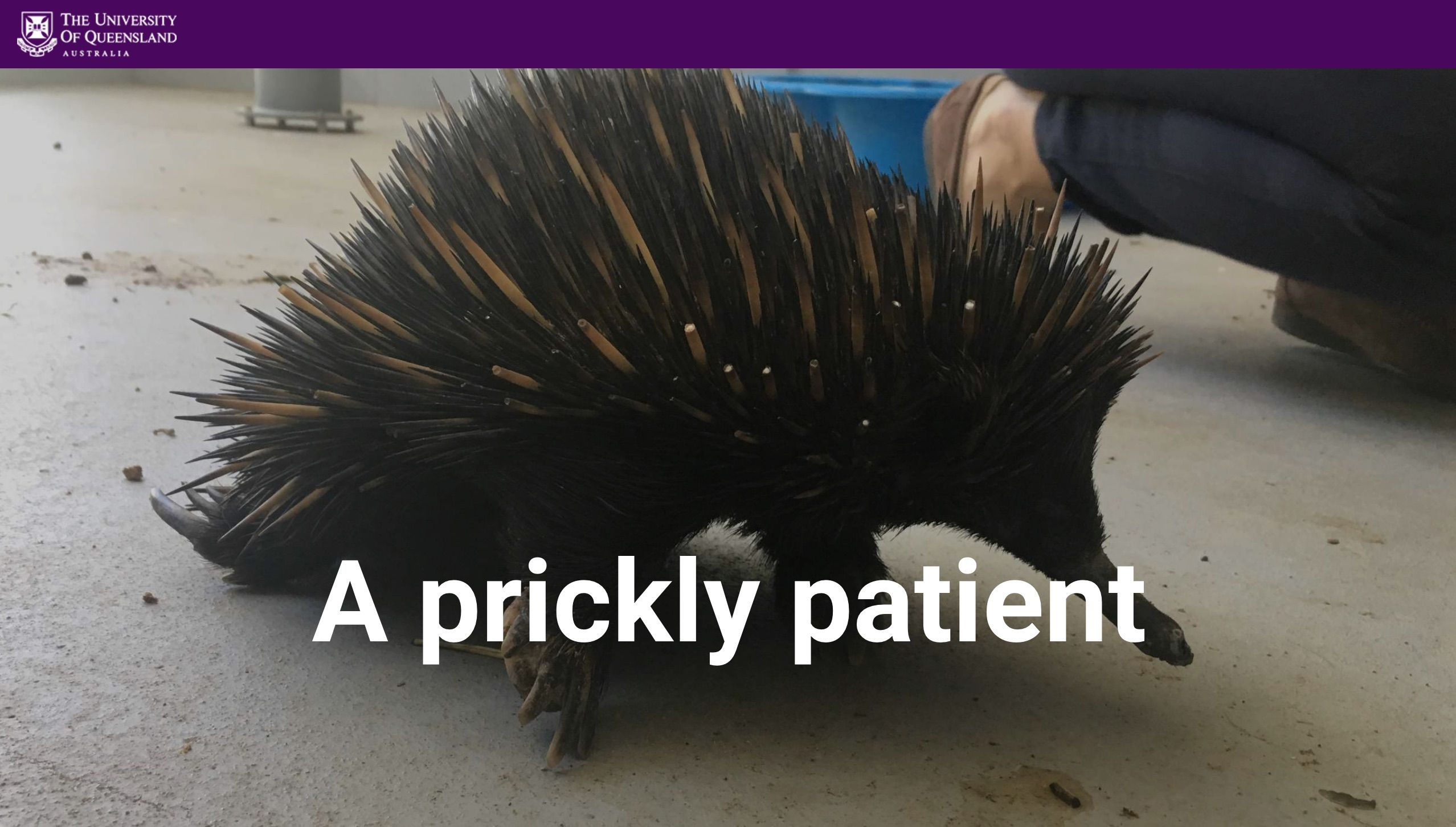 A prickly patient, UQ