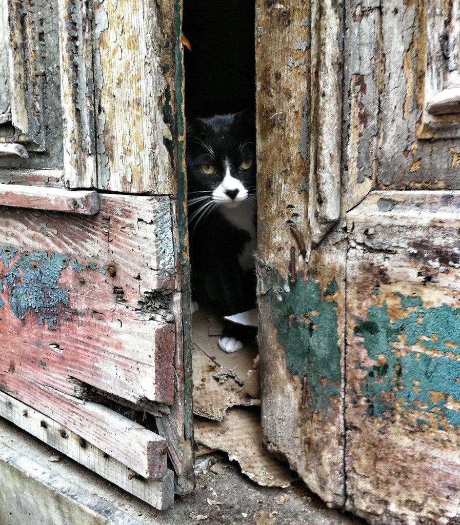 Gatino Casco Vello By Lil Abi Feral Cats Cats Cute Cats